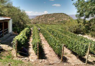 La Ruta del Vino – Viñas de Mendoza y La Rioja